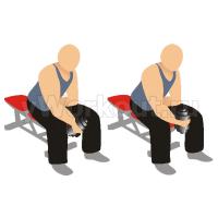 Сгибание запястья с гантелью сидя на скамье (ладонь внутрь)