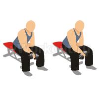Сгибание запястья с гантелью сидя на скамье (обратным хватом)