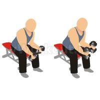 Сгибание запястий с гантелями сидя (ладони внутрь)