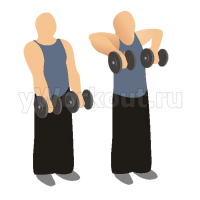 Вертикальная тяга гантелей к груди